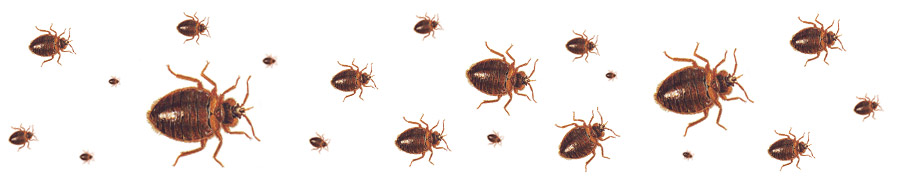 The Bed Bug Blog