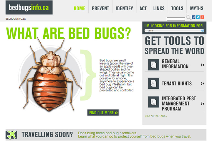 bed-bug-info