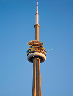 cn-tower-bed-bug