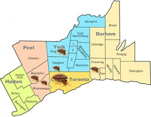 greater-toronto-area-bed-bug-infestations