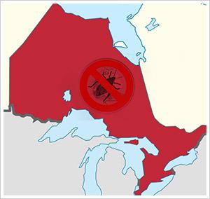Ontario_Canada_bed_bugs