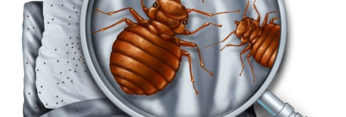 How to Detect Bed Bugs Like a Pro