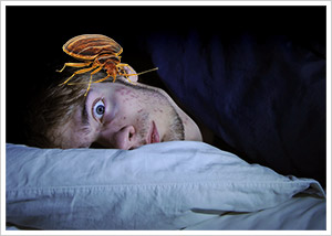 look for bedbugs at night